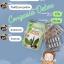 Congasia DETOX by ABJ คองกาเซีย ดีท็อกซ์ น้ำหนักลด หน้าใส ลำไส้สะอาด thumbnail 17